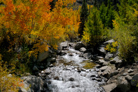 Autumn color at Bishop Creek-21 9-26-09.jpg
