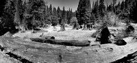 Stump Meadow at Kings Canyon NP pano3bw 9-20-09.jpg